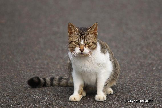 宮崎県総合運動公園の野良猫