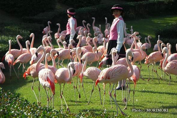 フェニックス自然動物園 フラミンゴショー