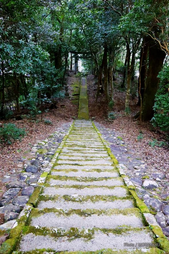 村所八幡神社 参道 上から