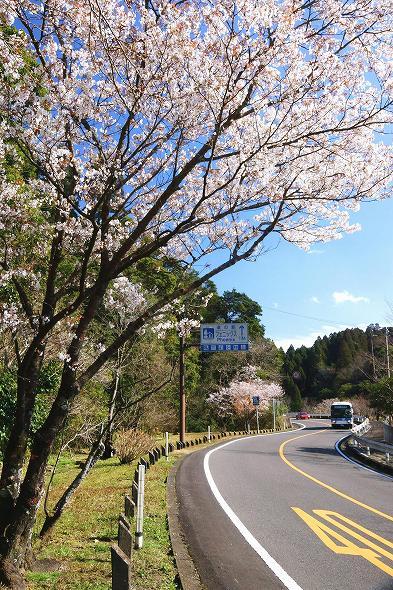 作品名「春告げヤマザクラ」(入選)