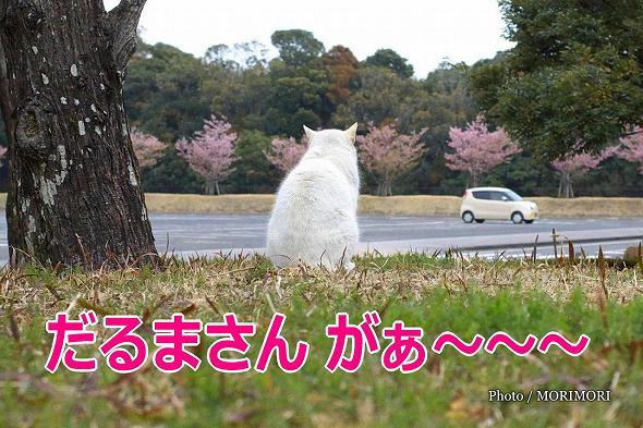 【のら】宮崎県総合運動公園の野良猫 4