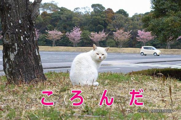 【のら】宮崎県総合運動公園の野良猫 5