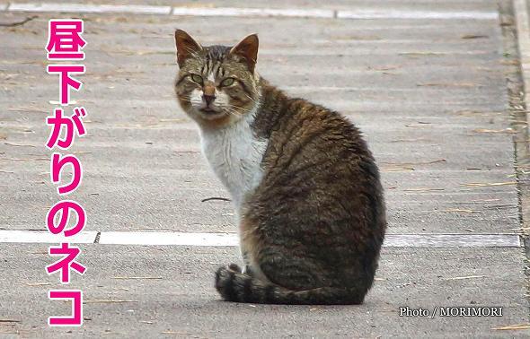 【のら】宮崎県総合運動公園の野良猫 7