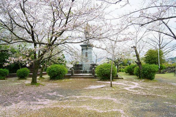 延岡市 城山 散った桜