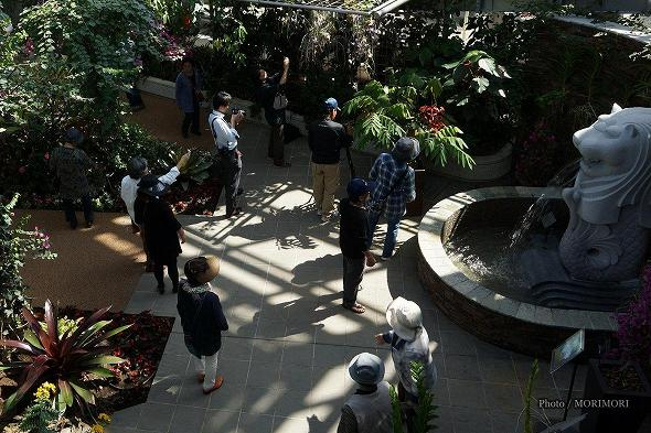 ヨウラクボクの花と見学者
