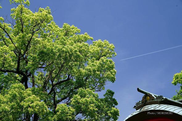 大塚神社(大塚八幡神社) 新緑 2