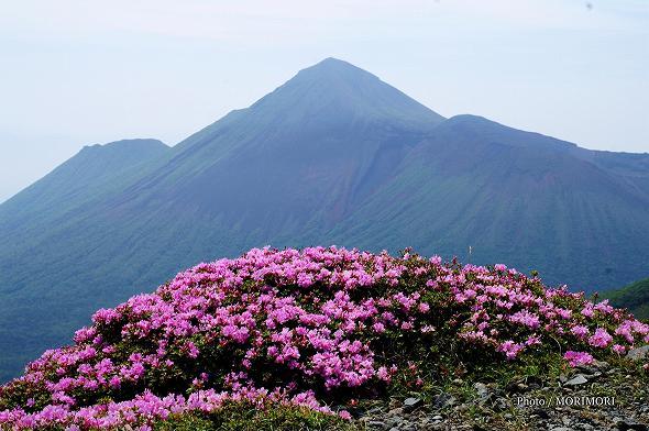 ミヤマキリシマと高千穂峰(新燃岳にて)
