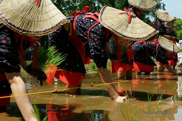 平成29年度 宮崎神宮 御田植祭の写真 1