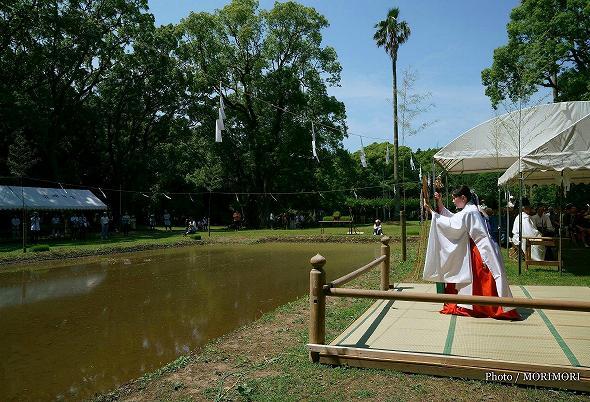 平成29年度 宮崎神宮 御田植祭の写真 3