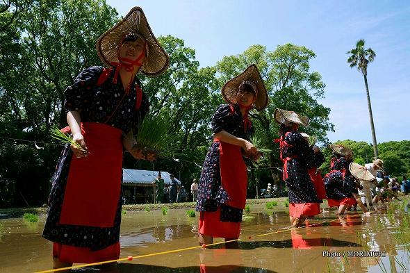 平成29年度 宮崎神宮 御田植祭の写真 4