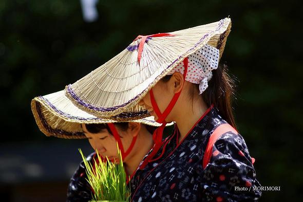 平成29年度 宮崎神宮 御田植祭の写真 8