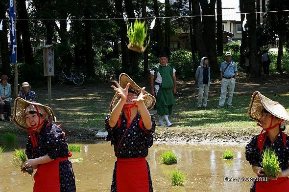 平成29年度 宮崎神宮 御田植祭の写真 9