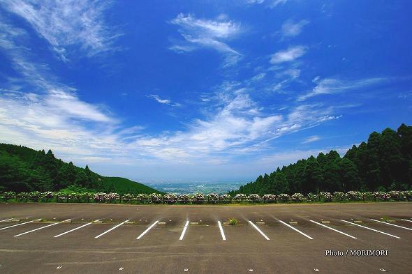 宮崎市清武町 荒平山森林公園のアジサイ