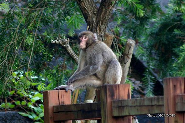 猿 道の駅なんごう にて