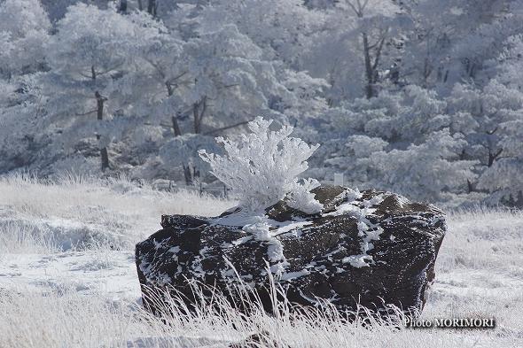 積雪した「えびの高原」にて
