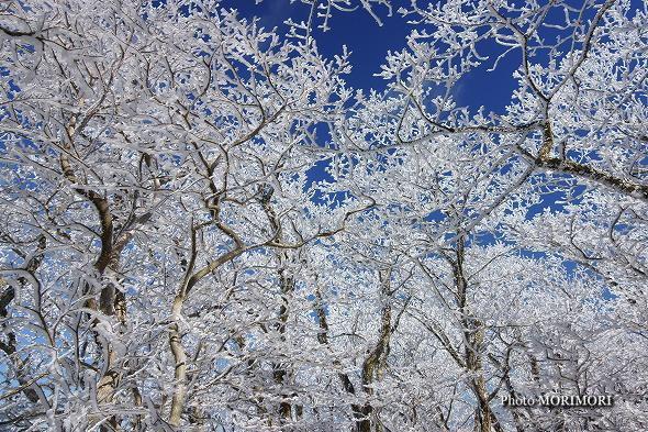 積雪した「白鳥山」にて