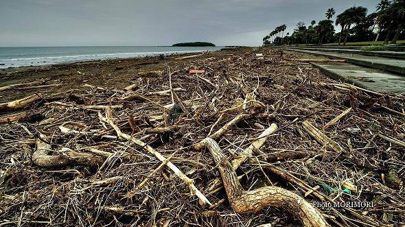 流木等で悲惨な状態に・・青島海岸