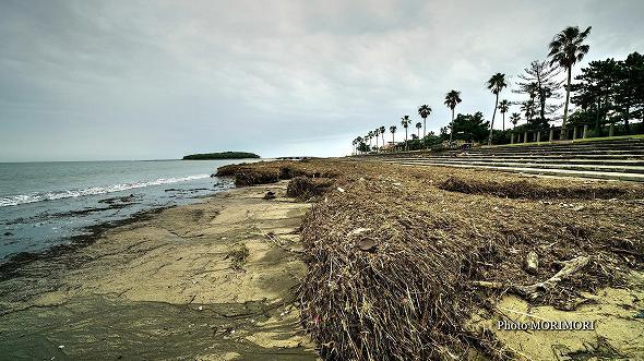 2017年 9月 流木等で悲惨な状態に・・青島海岸