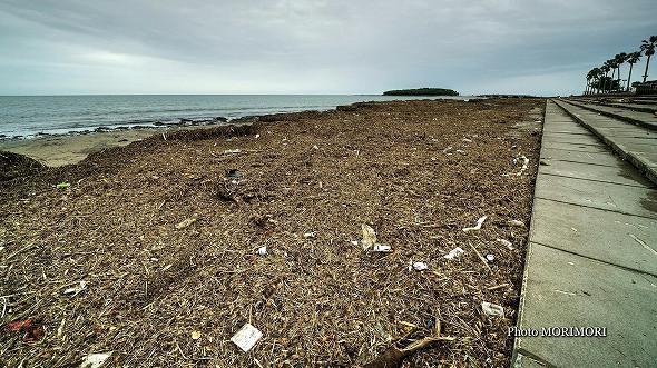 台風18号 流木等で悲惨な状態に・・青島海岸