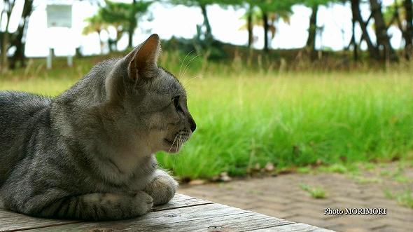 青島海岸のネコ