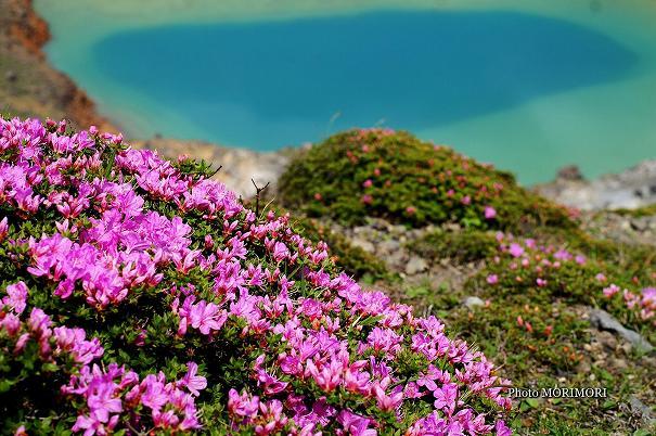 ミヤマキリシマと新燃岳火口湖(噴火前)
