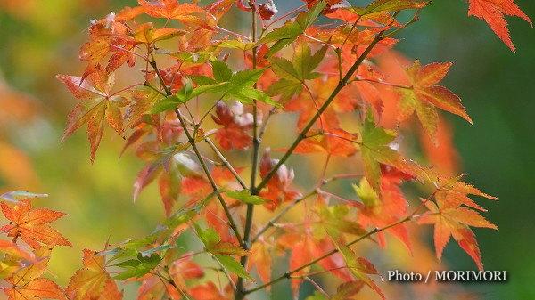 宮崎市内の紅葉もそろそろ