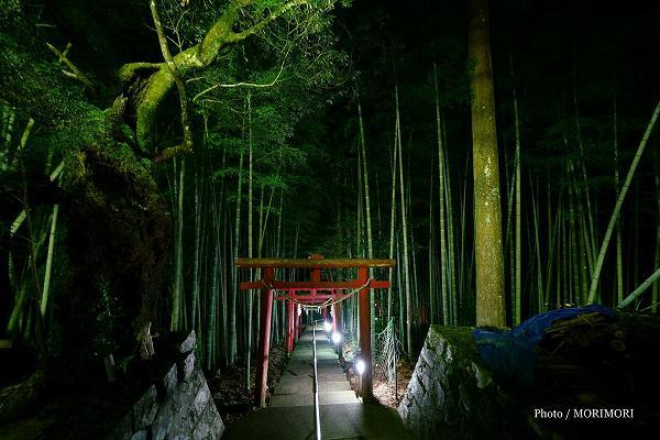 児原稲荷神社 竹林と幾重にも続く朱色の鳥居が美しい参道階段