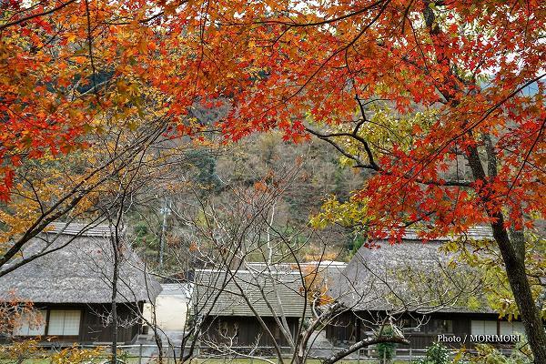 小川作小屋村の紅葉 1