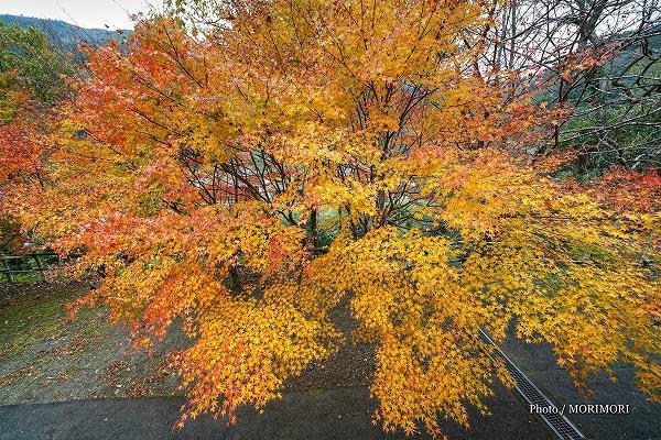 小川作小屋村の紅葉 3