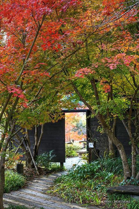 小川作小屋村の紅葉 4
