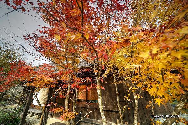 小川作小屋村の紅葉 5