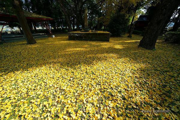 早馬公園のイチョウの黄葉