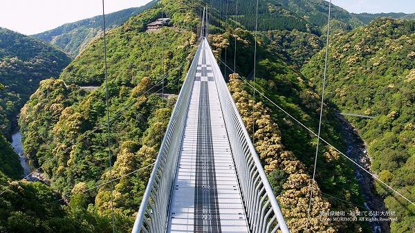 綾町 照葉樹林と照葉大吊橋