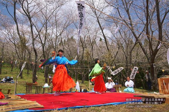 花立公園 郷原神社による「花立花見神楽」奉仕者(ほうしゃ)舞