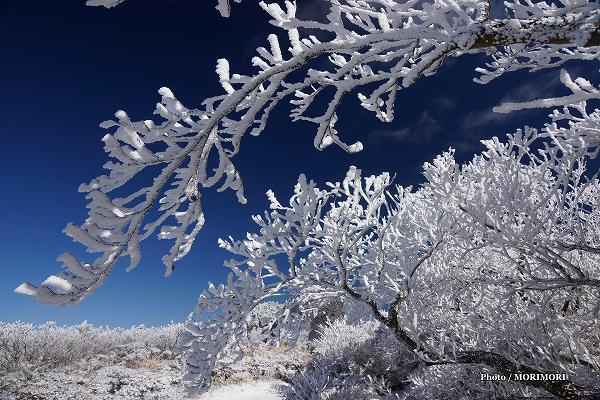 えびの高原の樹氷 白鳥山にて
