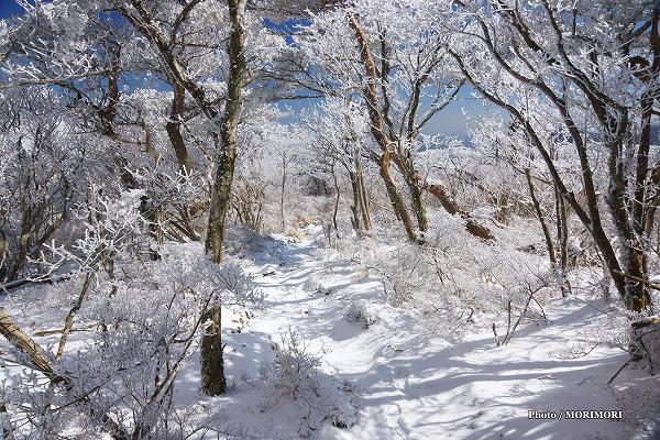 積雪した えびの高原 池巡り自然探勝路