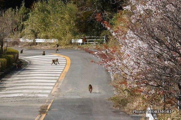 堀切峠近くで見かけた猿