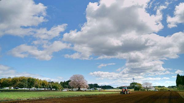 宮崎県国富町 大坪の一本桜