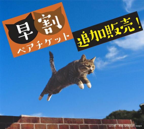 岩合光昭写真展「ねこ」宮崎県総合博物館で開催