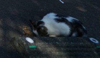 日向岬のネコ
