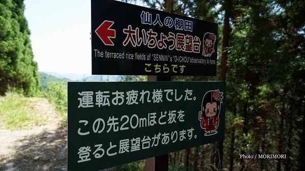 椎葉村 仙人の棚田・大いちょう展望台