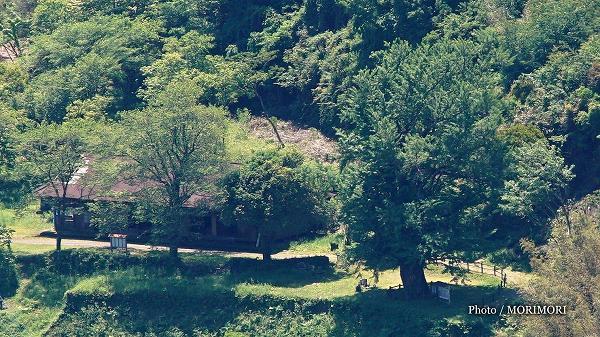 松尾の大イチョウと庄屋家屋