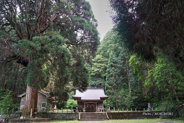 五ヶ瀬町古戸野神社とスギの巨木