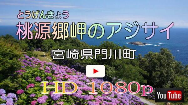 桃源郷岬のアジサイ Youtube動画