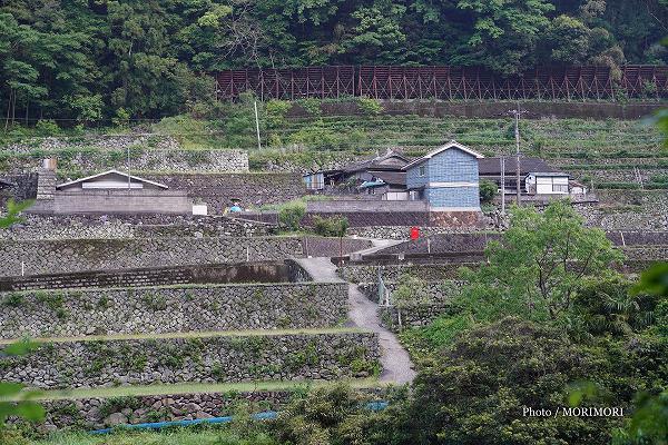 石垣の村戸川 2