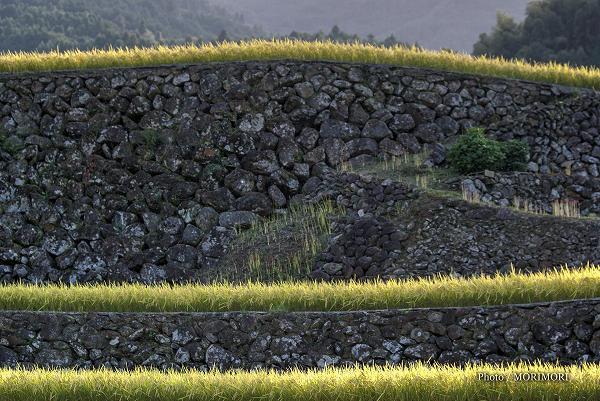 佐賀県 蕨野の棚田の石垣