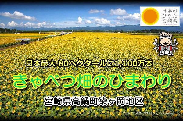 日本一のひまわり畑(宮崎県高鍋町)