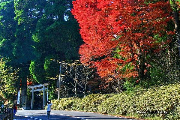 白鳥神社の紅葉