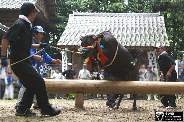 牛越祭り(えびの市)