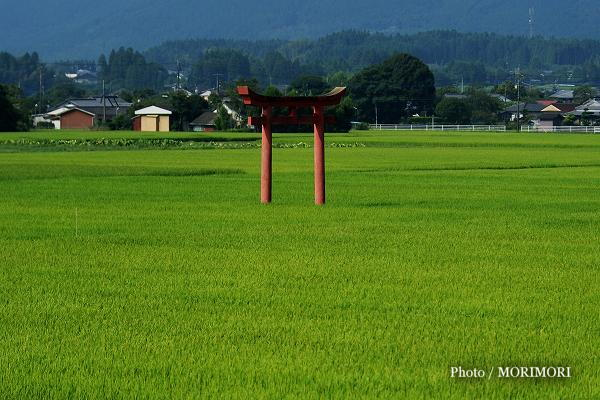 えびの市 田んぼの畔に立つ菅原神社の鳥居